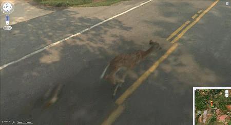Biche renversée dans Google Street view